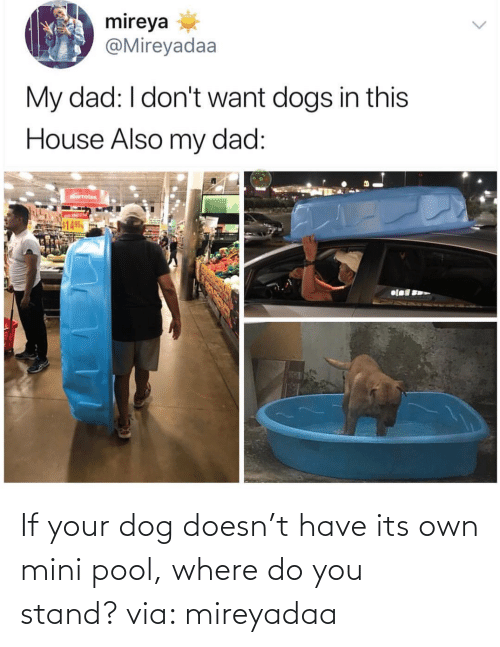 Where: If your dog doesn't have its own mini pool, where do you stand? via: mireyadaa