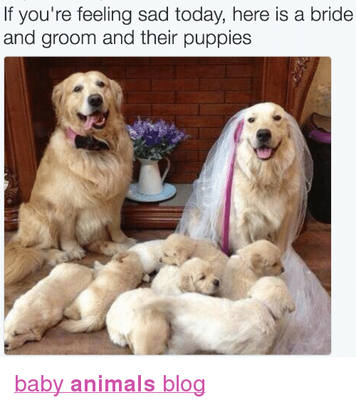 "Animals, Puppies, and Target: If you're feeling sad today, here is a bride  and groom and their puppies <p><a href=""http://babyanimalgifs.tumblr.com/"" target=""_blank"">baby <b>animals</b> blog</a></p>"
