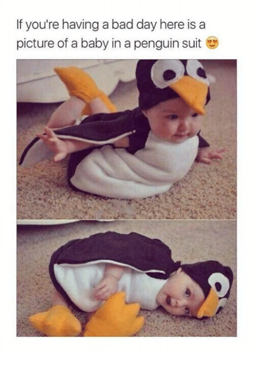 Bad, Bad Day, and Memes: If you're having a bad day here is a  picture of a baby in a penguin s