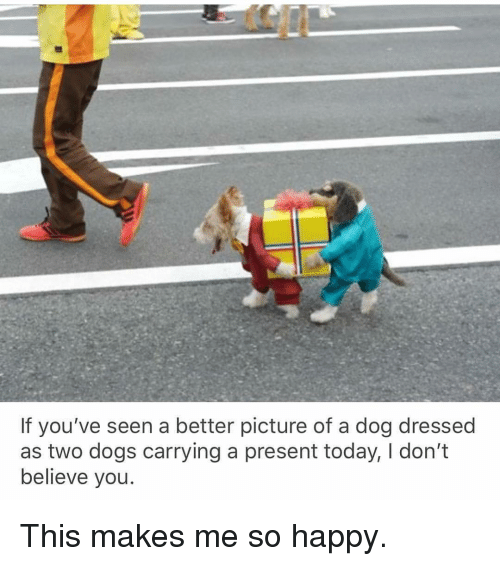 Dogs, Memes, and Happy: If you've seen a better picture of a dog dressed  as two dogs carrying a present today, I don't  believe you This makes me so happy.