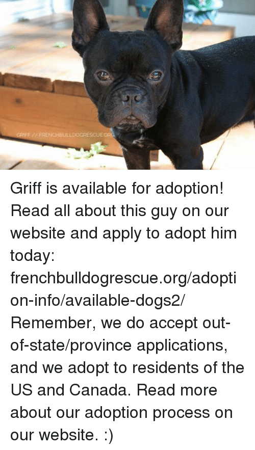 Memes, Canada, and Griff: IFF FRENCHBU Griff is available for adoption! Read all about this guy on our website  and apply to adopt him today: frenchbulldogrescue.org/adoption-info/available-dogs2/  Remember, we do accept out-of-state/province applications, and we adopt to residents of the US and Canada. Read more about our adoption process on our website. :)
