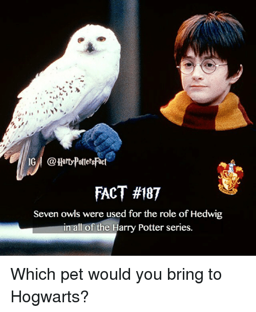 Harry Potter (Series): IG I @HartyPottersact  FACT #187  Seven owls were used for the role of Hedwig  in all of the Harry Potter series. Which pet would you bring to Hogwarts?