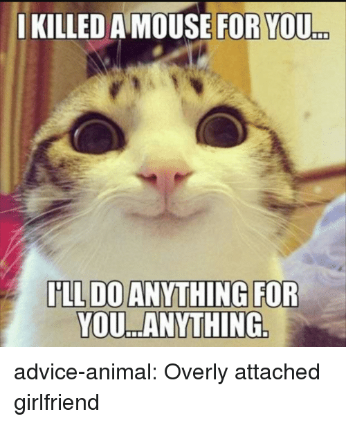 Advice, Tumblr, and Animal: IKILLED A MOUSE FOR YOU  ..  YOU. ANYTHING advice-animal:  Overly attached girlfriend