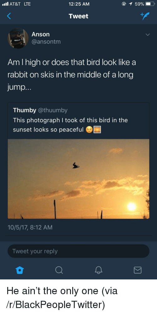 Blackpeopletwitter, At&t, and Rabbit: Il AT&T LTE  12:25 AM  Tweet  Anson  @ansontm  Am I high or does that bird look like a  rabbit on skis in the middle of a long  jump.  Thumby @thuumby  This photograph I took of this bird in the  sunset looks so peaceful  10/5/17, 8:12 AM  Tweet your reply <p>He ain't the only one (via /r/BlackPeopleTwitter)</p>