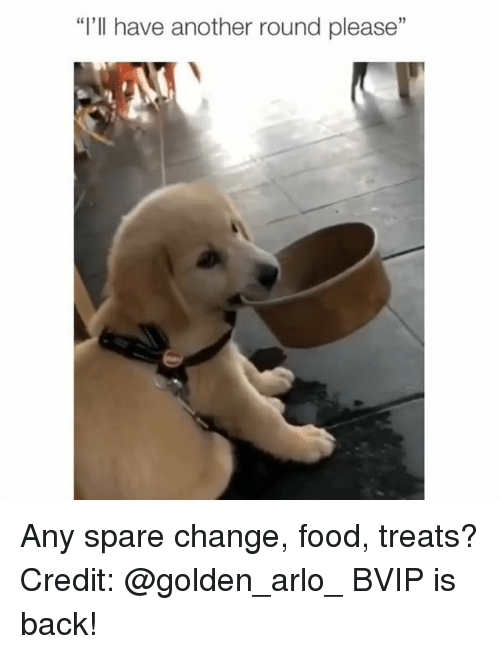 "Food, Memes, and Change: ""I'll have another round please"" Any spare change, food, treats? Credit: @golden_arlo_ BVIP is back!"