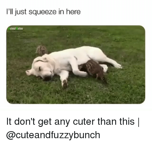 Cuter Than: I'll just squeeze in here  lation It don't get any cuter than this | @cuteandfuzzybunch