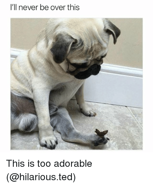 Funny, Ted, and Hilarious: I'll never be over this This is too adorable (@hilarious.ted)
