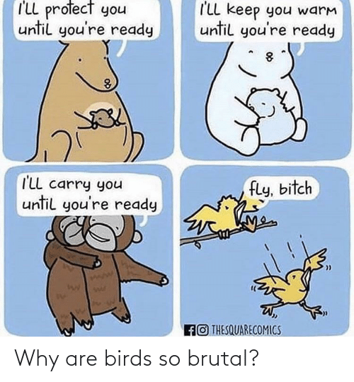 Birds: I'LL profect you  I'LL keep you warm  until you're ready  until you're ready  I'Ll carry you  until you're ready  fly, bitch  wae  FO THESQUARECOMICS Why are birds so brutal?