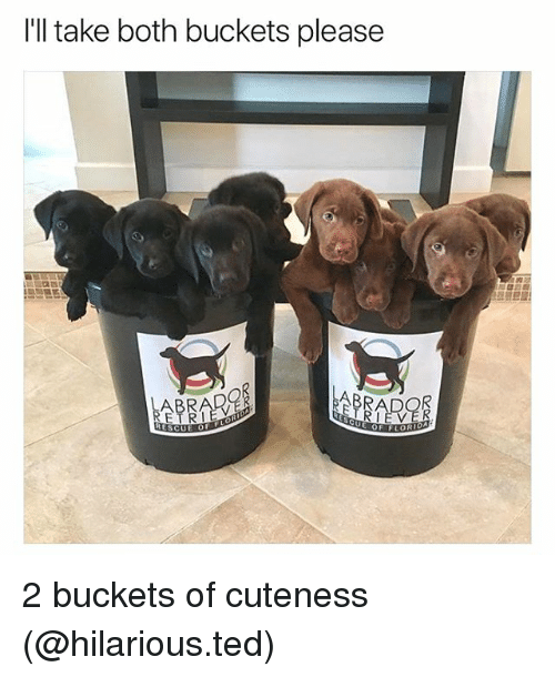 Funny, Ted, and Hilarious: I'll take both buckets please 2 buckets of cuteness (@hilarious.ted)