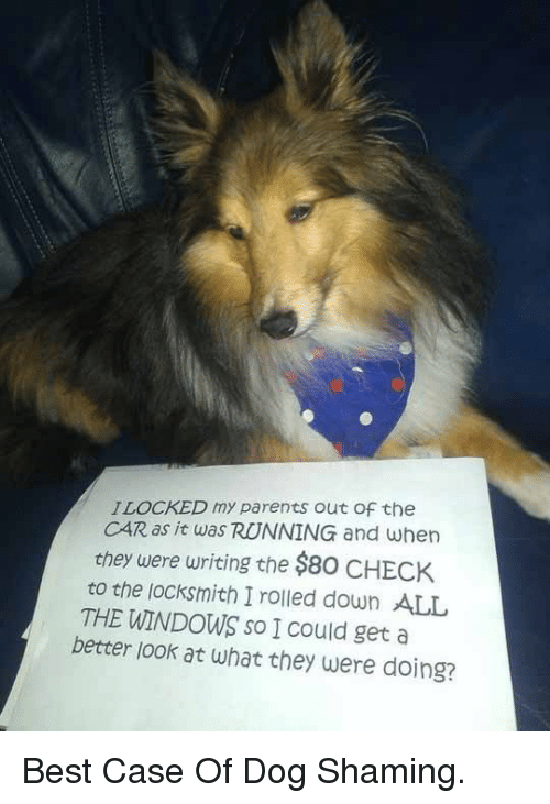 Parents, Windows, and Best: ILOCKED my parents out Of the  CAR as it was RUNNING and when  they were writing the $80 CHECK  to the locksmith I rolled down ALL  THE WINDOWS so I Could get a  better look at what they were doing? <p>Best Case Of Dog Shaming.</p>