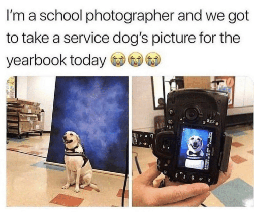 Dogs, School, and Today: I'm a school photographer and we got  to take a service dog's picture for the  yearbook today
