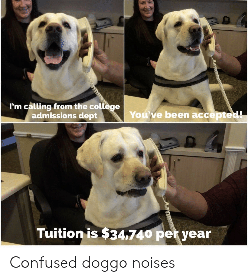 College, Confused, and Accepted: I'm calling from the college  admissions dept  You've been accepted!  Tuition is $34,740 per year Confused doggo noises