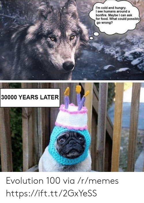 Food, Hungry, and Memes: I'm cold and hungry.  I see humans around a  bonfire. Maybe can ask  for food. What could possibly  go wrong?  30000 YEARS LATER Evolution 100 via /r/memes https://ift.tt/2GxYeSS