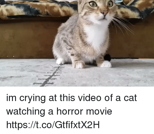 Crying, Movie, and Video: im crying at this video of a cat watching a horror movie https://t.co/GtfifxtX2H