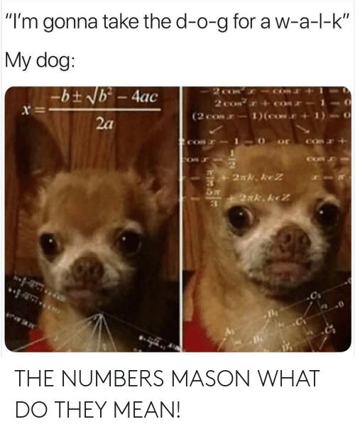 """the d: """"I'm gonna take the d-o-g for a w-a-l-k  My dog:  2 co  2 coN  (2 cos-1)(cos.  -bt Nb - 4ac  x  2a  2N. keZ  2xk keZ THE NUMBERS MASON WHAT DO THEY MEAN!"""