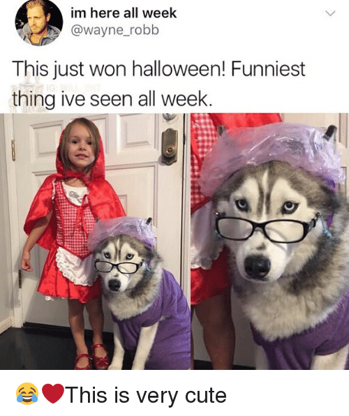Cute, Halloween, and Memes: im here all week  @wayne_robb  This just won halloween! Funniest  thing ive seen all week 😂❤️This is very cute