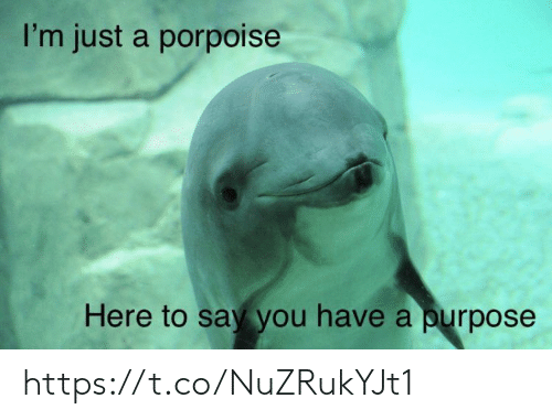 Memes, 🤖, and You: I'm just a porpoise  Here to say you have a purpose https://t.co/NuZRukYJt1