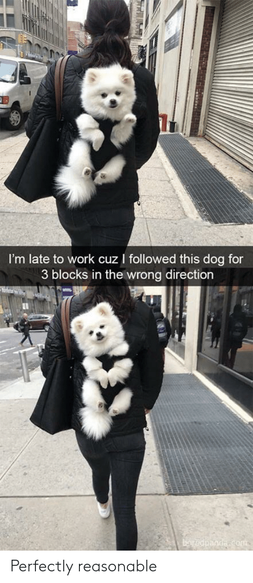 Work, Dog, and Com: I'm late to work cuz I followed this dog for  3 blocks in the wrong direction  baredpanda com  TRRAH Perfectly reasonable