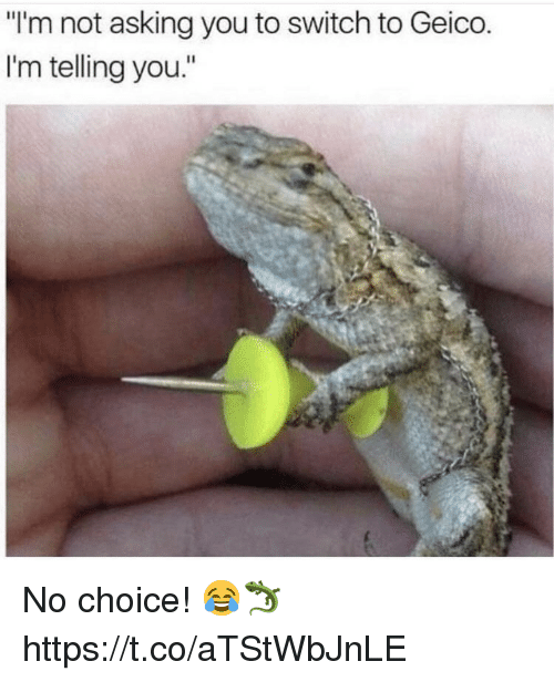 """Asking, Geico, and Switch: """"I'm not asking you to switch to Geico  I'm telling you."""" No choice! 😂🦎 https://t.co/aTStWbJnLE"""