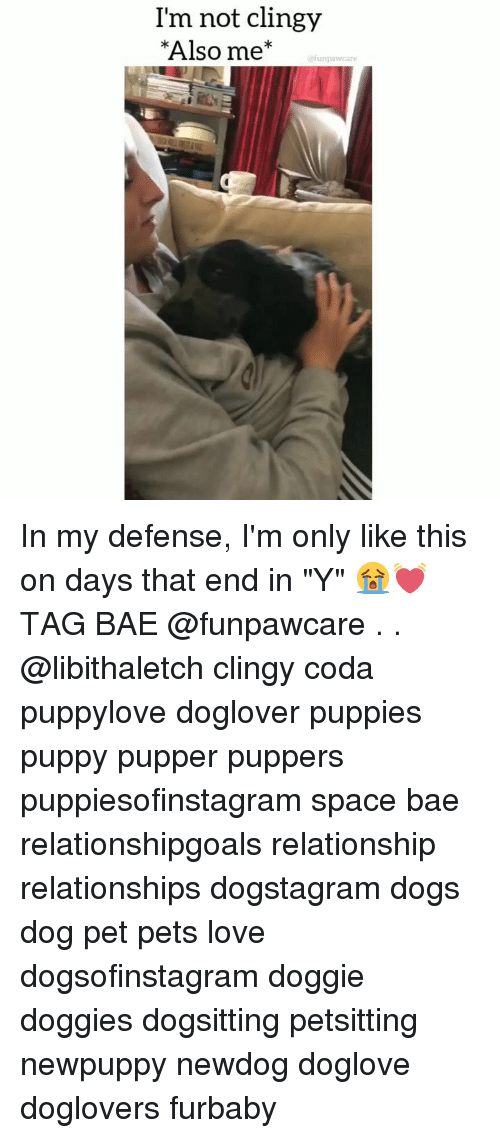 "Bae, Dogs, and Love: I'm not clingy  Also me  @funpawcare In my defense, I'm only like this on days that end in ""Y"" 😭💓 TAG BAE @funpawcare . . @libithaletch clingy coda puppylove doglover puppies puppy pupper puppers puppiesofinstagram space bae relationshipgoals relationship relationships dogstagram dogs dog pet pets love dogsofinstagram doggie doggies dogsitting petsitting newpuppy newdog doglove doglovers furbaby"
