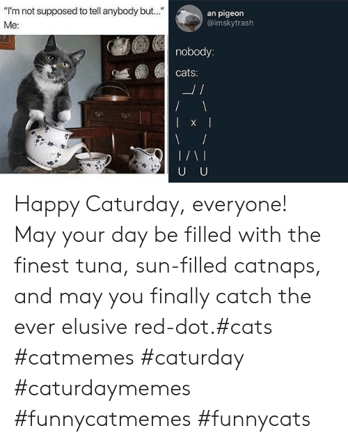 "Caturday: ""I'm not supposed to tell anybody but..""  an pigeon  @imskytrash  Me:  nobody:  cats:  L/  U U Happy Caturday, everyone! May your day be filled with the finest tuna, sun-filled catnaps, and may you finally catch the ever elusive red-dot.#cats #catmemes #caturday #caturdaymemes #funnycatmemes #funnycats"
