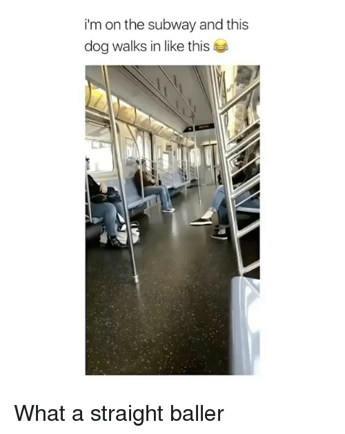 Subway, Ballers, and Dog: im on the subway and this  dog walks in like this What a straight baller