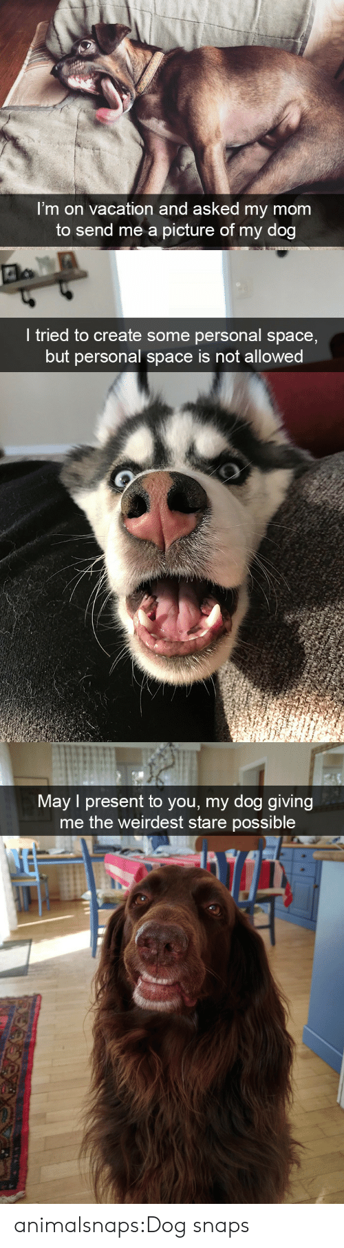 Target, Tumblr, and Blog: I'm on vacation and asked my mom  to send me a picture of my dog   I tried to create some personal space,  but personal space is not allowed   Mav I present to you, my dog giving  me the weirdest stare possible animalsnaps:Dog snaps