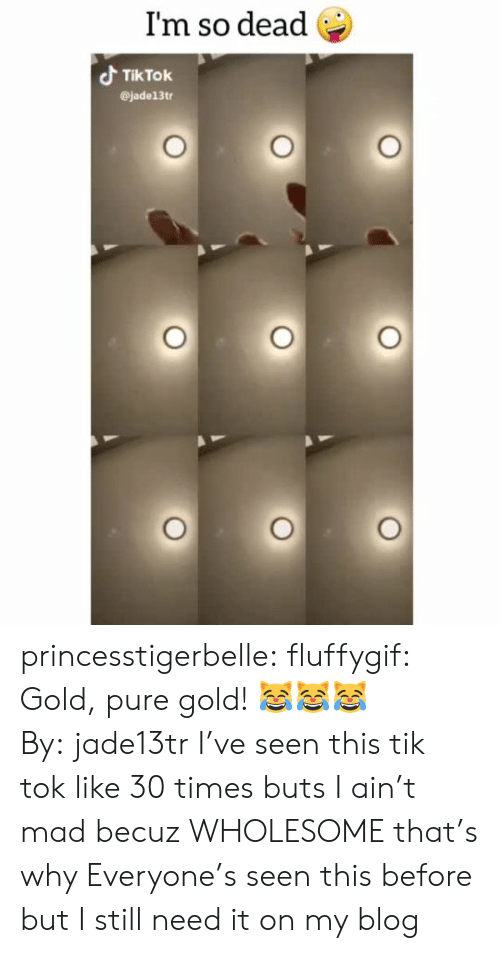 Tumblr, Blog, and Mad: I'm so dead  Tik Tok  @jade13tr princesstigerbelle:  fluffygif:  Gold, pure gold! 😹😹😹By:jade13tr  I've seen this tik tok like 30 times buts I ain't mad becuz WHOLESOME that's why   Everyone's seen this before but I still need it on my blog