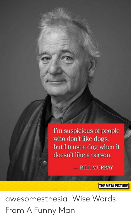 Dogs, Funny, and Tumblr: I'm suspicious of people  who don't like dogs,  but I trust a dog when it  doesn't like a person.  BILL MURRAY  THE META PICTURE awesomesthesia:  Wise Words From A Funny Man