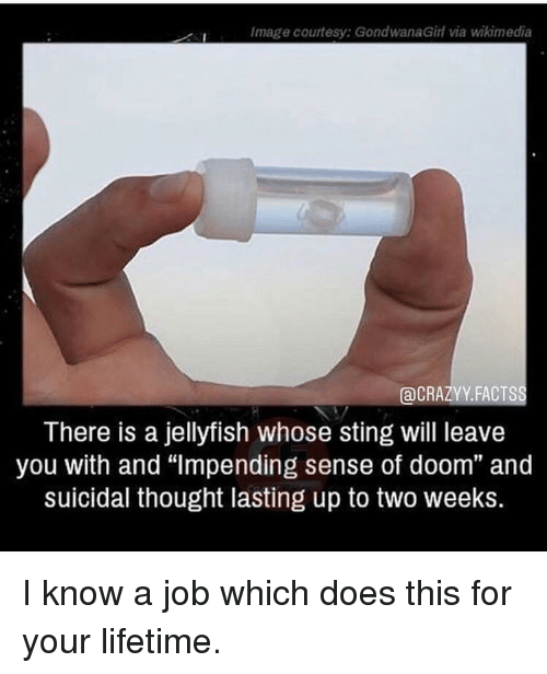 """Image, Lifetime, and Sting: Image courtesy: GondwanaGirl via wikimedia  aCRAZYY. FACTSS  There is a jellyfish whose sting will leave  you with and """"lmpending sense of doom"""" and  suicidal thought lasting up to two weeks. I know a job which does this for your lifetime."""