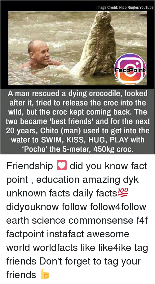 Crocs, Facts, and Friends: Image Credit: Nico Ruijter/YouTube  FactPoin  A man rescued a dying crocodile, looked  after it, tried to release the croc into the  wild, but the croc kept coming back. The  two became 'best friends' and for the next  20 years, Chito (man) used to get into the  water to SWIM, KISS, HUG, PLAY with  'Pocho' the 5-meter, 450kg croc. Friendship 💟 did you know fact point , education amazing dyk unknown facts daily facts💯 didyouknow follow follow4follow earth science commonsense f4f factpoint instafact awesome world worldfacts like like4ike tag friends Don't forget to tag your friends 👍