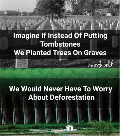 graves: Imagine If Instead Of Putting  Tombstones  We Planted Trees On Graves  We Would Never Have To Worry  About Deforestation