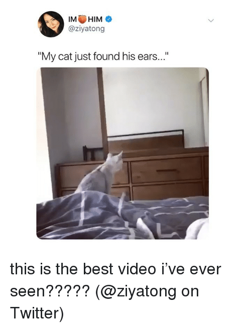 """Best Video: IMHIM  @ziyatong  """"My cat just found his ears..."""" this is the best video i've ever seen????? (@ziyatong on Twitter)"""