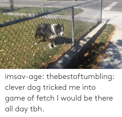 Target, Tbh, and Tumblr: imsav-age:   thebestoftumbling:  clever dog tricked me into game of fetch  I would be there all day tbh.