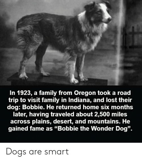 """Dogs, Family, and Lost: In 1923, a family from Oregon took a road  trip to visit family in Indiana, and lost their  dog: Bobbie. He returned home six months  later, having traveled about 2,500 miles  across plains, desert, and mountains. He  gained fame as """"Bobbie the Wonder Dog"""". Dogs are smart"""
