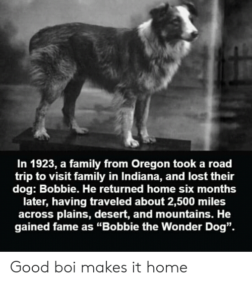 """Family, Reddit, and Lost: In 1923, a family from Oregon took a road  trip to visit family in Indiana, and lost their  dog: Bobbie. He returned home six months  later, having traveled about 2,500 miles  across plains, desert, and mountains. He  gained fame as """"Bobbie the Wonder Dog"""". Good boi makes it home"""