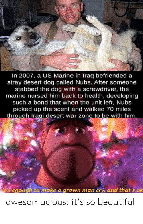 bond: In 2007, a US Marine in Iraq befriended a  stray desert dog called Nubs. After someone  stabbed the dog with a screwdriver, the  marine nursed him back to health, developing  such a bond that when the unit left, Nubs  picked up the scent and walked 70 miles  through Iraqi desert war zone to be with him.  it's enough to make a grown man cry, and that's ok awesomacious:  it's so beautiful