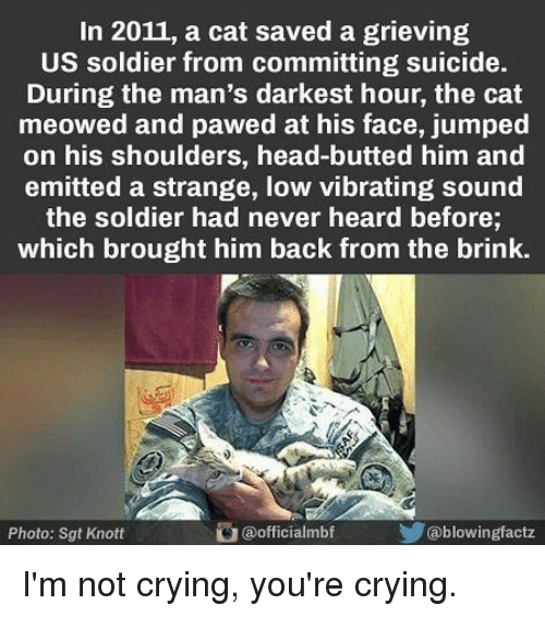 Crying, Head, and Not Crying: In 2011, a cat saved a grieving  US soldier from committing suicide.  During the man's darkest hour, the cat  meowed and pawed at his face, jumped  on his shoulders, head-butted him and  emitted a strange, low vibrating sound  the soldier had never heard before;  which brought him back from the brink.  Photo: Sgt Knott  @officialmbf  @blowingfactz I'm not crying, you're crying.