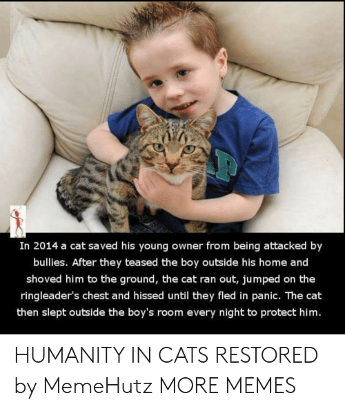 Cats, Dank, and Memes: In 2014 a cat saved his young owner from being attacked by  bullies. After they teased the boy outside his home and  shoved him to the ground, the cat ran out, jumped on the  ringleader's chest and hissed until they fled in panic. The cat  then slept outside the boy's room every night to protect him. HUMANITY IN CATS RESTORED by MemeHutz MORE MEMES