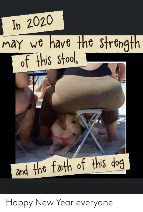 Faith: In 2020  may wo have the strongth  of this stool,  and the faith of this dog Happy New Year everyone