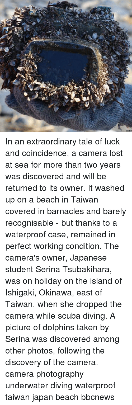 Memes, Taken, and Lost: In an extraordinary tale of luck and coincidence, a camera lost at sea for more than two years was discovered and will be returned to its owner. It washed up on a beach in Taiwan covered in barnacles and barely recognisable - but thanks to a waterproof case, remained in perfect working condition. The camera's owner, Japanese student Serina Tsubakihara, was on holiday on the island of Ishigaki, Okinawa, east of Taiwan, when she dropped the camera while scuba diving. A picture of dolphins taken by Serina was discovered among other photos, following the discovery of the camera. camera photography underwater diving waterproof taiwan japan beach bbcnews