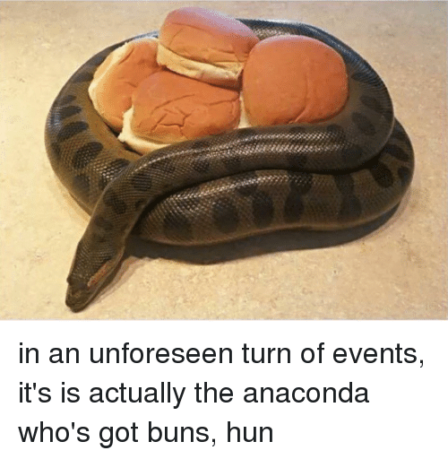 Anaconda, Girl Memes, and Huns: in an unforeseen turn of events, it's is actually the anaconda who's got buns, hun