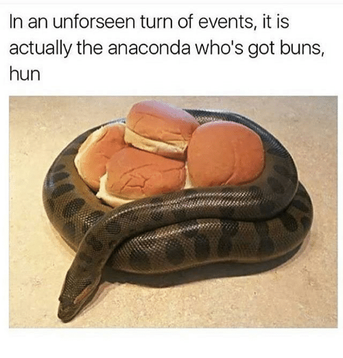 Anaconda, Ironic, and Huns: In an unforseen turn of events, it is  actually the anaconda who's got buns,  hun