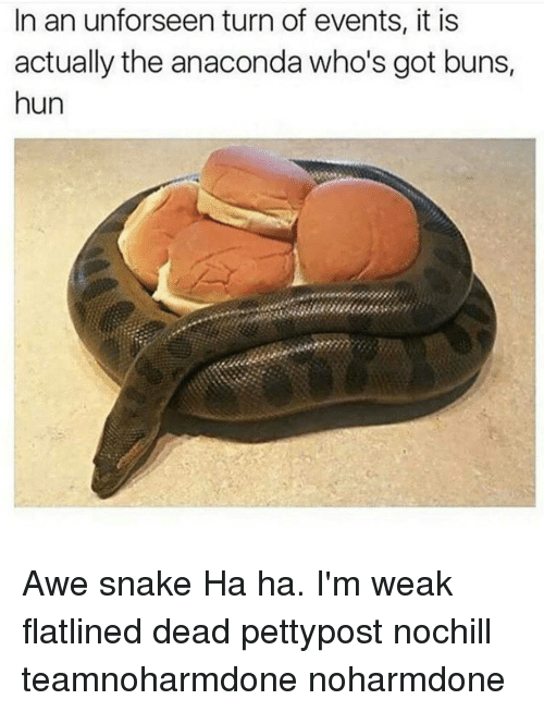 Anaconda, Memes, and Snake: In an unforseen turn of events, it is  actually the anaconda who's got buns,  hun Awe snake Ha ha. I'm weak flatlined dead pettypost nochill teamnoharmdone noharmdone