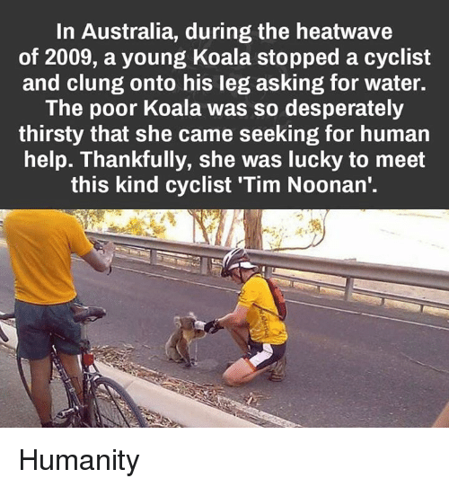 Thirsty, Australia, and Help: In Australia, during the heatwave  of 2009, a young Koala stopped a cyclist  and clung onto his leg asking for water.  The poor Koala was so desperately  thirsty that she came seeking for human  help. Thankfully, she was lucky to meet  this kind cyclist Tim Noonan' Humanity
