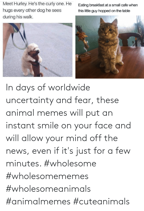 Fear: In days of worldwide uncertainty and fear, these animal memes will put an instant smile on your face and will allow your mind off the news, even if it's just for a few minutes. #wholesome #wholesomememes #wholesomeanimals #animalmemes #cuteanimals