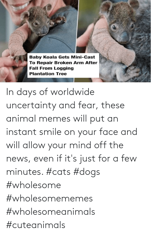 Its Just: In days of worldwide uncertainty and fear, these animal memes will put an instant smile on your face and will allow your mind off the news, even if it's just for a few minutes. #cats #dogs #wholesome #wholesomememes #wholesomeanimals #cuteanimals