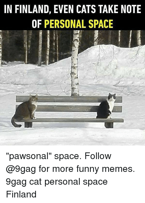 """9gag, Cats, and Funny: IN FINLAND, EVEN CATS TAKE NOTE  OF PERSONAL SPACE """"pawsonal"""" space. Follow @9gag for more funny memes. 9gag cat personal space Finland"""