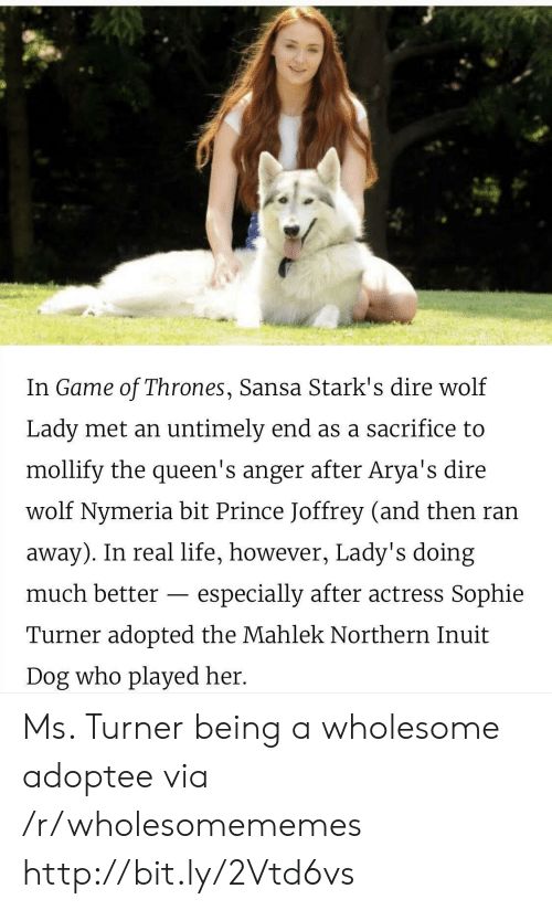 Game of Thrones, Life, and Prince: In Game of Thrones, Sansa Stark's dire wolf  Lady met an untimely end as a sacrifice to  mollify the queen's anger after Arya's dire  wolf Nymeria bit Prince Joffrey (and then ran  away). In real life, however, Lady's doing  much better  especially after actress Sophie  Turner adopted the Mahlek Northern Inuit  Dog who played her. Ms. Turner being a wholesome adoptee via /r/wholesomememes http://bit.ly/2Vtd6vs