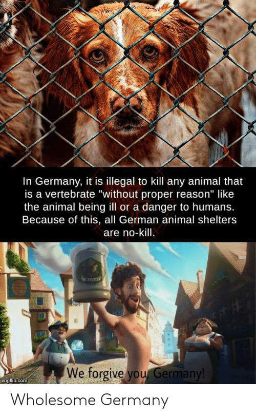"""Animal, Germany, and Wholesome: In Germany, it is illegal to kill any animal that  is a vertebrate """"without proper reason"""" like  the animal being ill or a danger to humans.  Because of this, all German animal shelters  are no-kill.  We forgive you Germany!  imgflip.com Wholesome Germany"""